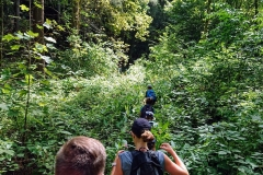 Dschungelweg