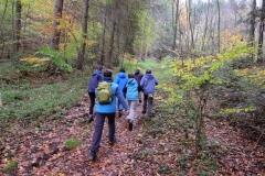 Weg-In-Den-Wald